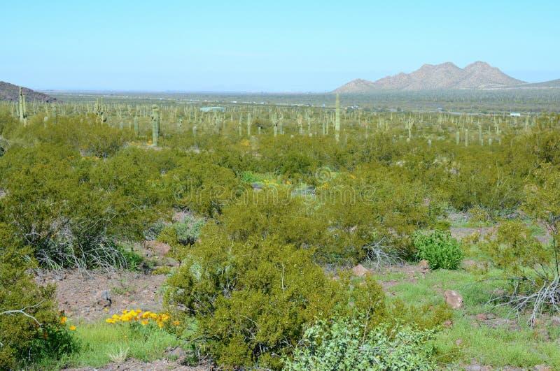 Vista del deserto di Sonoran - parco di stato di Picacho fotografie stock
