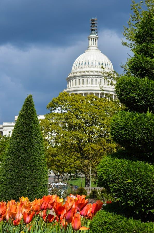Vista del edificio del capitolio de Estados Unidos en la primavera, con los tulipanes rojos y anaranjados imágenes de archivo libres de regalías