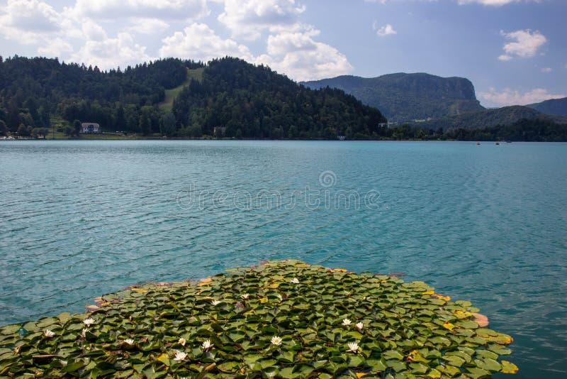 vista del famoso lago Bled en Eslovenia fotos de archivo libres de regalías