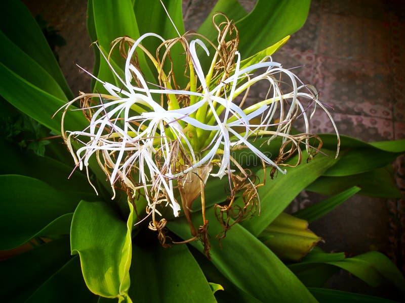 vista del fiore con la foglia verde immagini stock libere da diritti