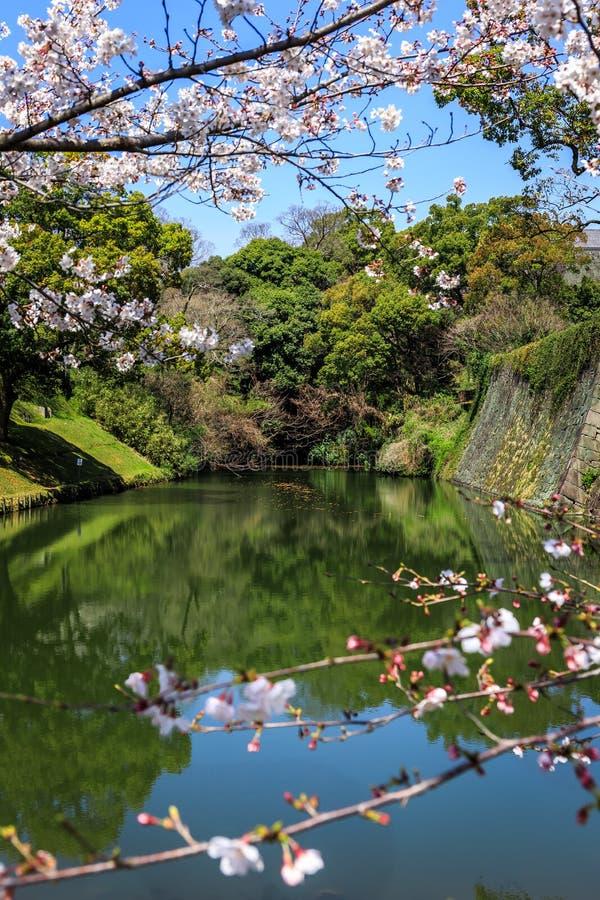 Vista del fiume attraverso sakura fotografie stock