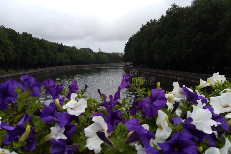 Vista del fiume dal ponte nella priorità alta della petunia fotografia stock