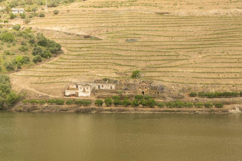 Vista del fiume, delle proprietà e delle vigne del Duero immagine stock libera da diritti