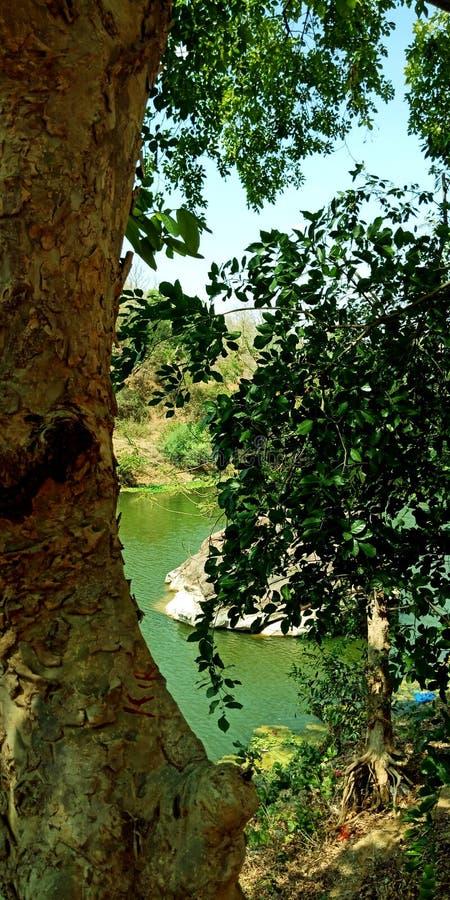 Vista del fiume dietro la foto delle azione dell'albero fotografia stock libera da diritti