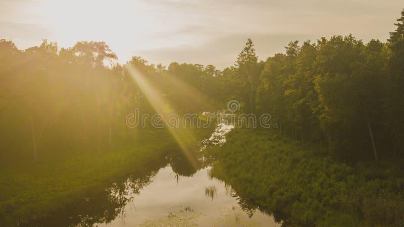 Vista del fuco della foresta e del lago fotografia stock