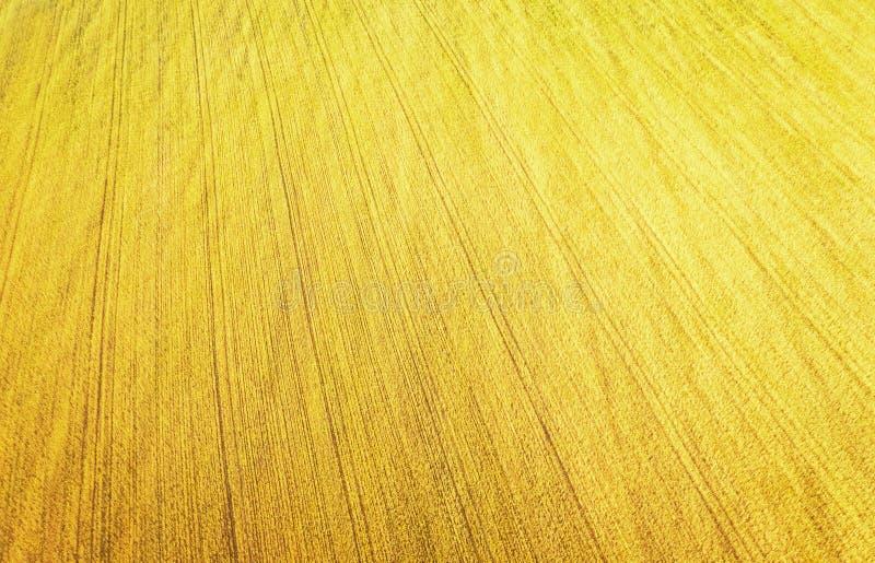 Vista del giacimento di grano da altezza immagini stock