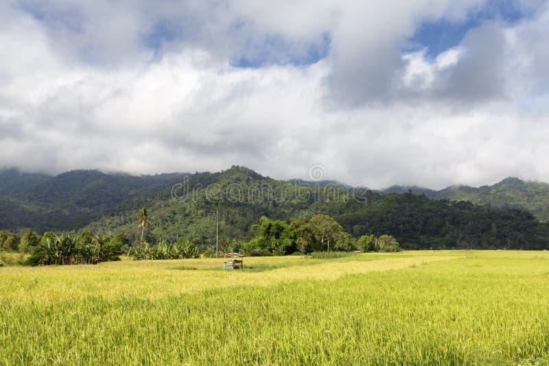 Vista del giacimento del riso immagine stock libera da diritti