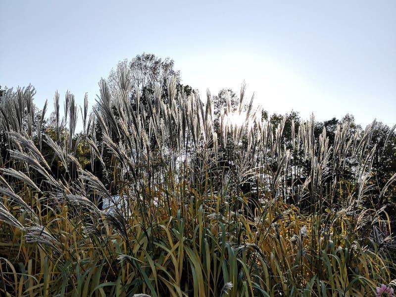 Vista del giardino botanico fotografia stock libera da diritti
