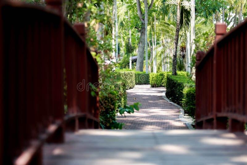 Vista del giardino botanico della regina Sirikit, Chiang Mai, Tailandia fotografie stock libere da diritti