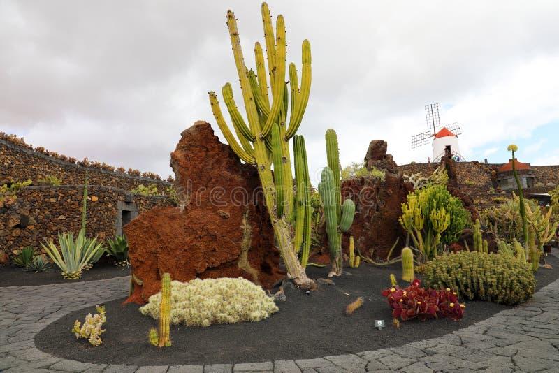 Vista del giardino del cactus con il mulino a vento, Jardin de Cactus in Guatiza, Lanzarote, isole Canarie, Spagna fotografia stock libera da diritti
