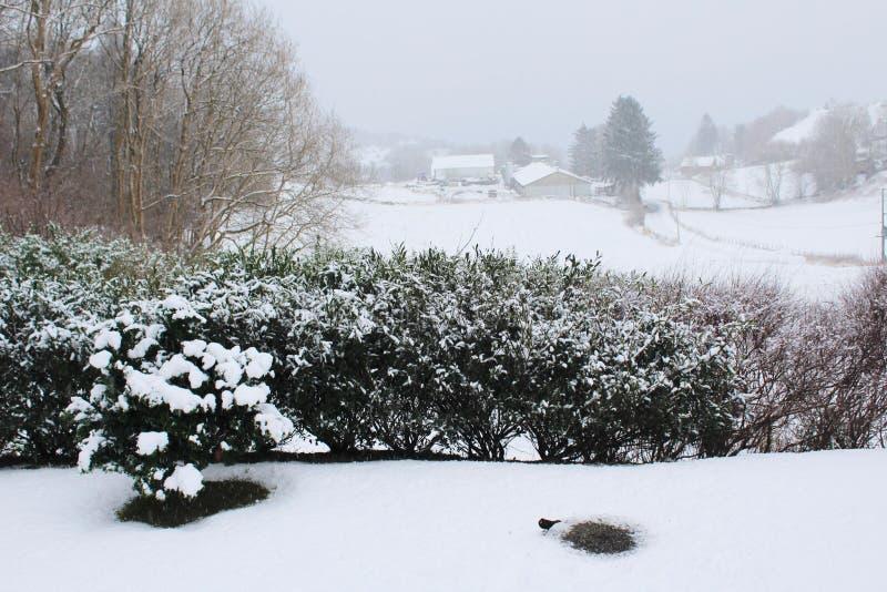 Vista del giardino sull'inverno fotografia stock libera da diritti