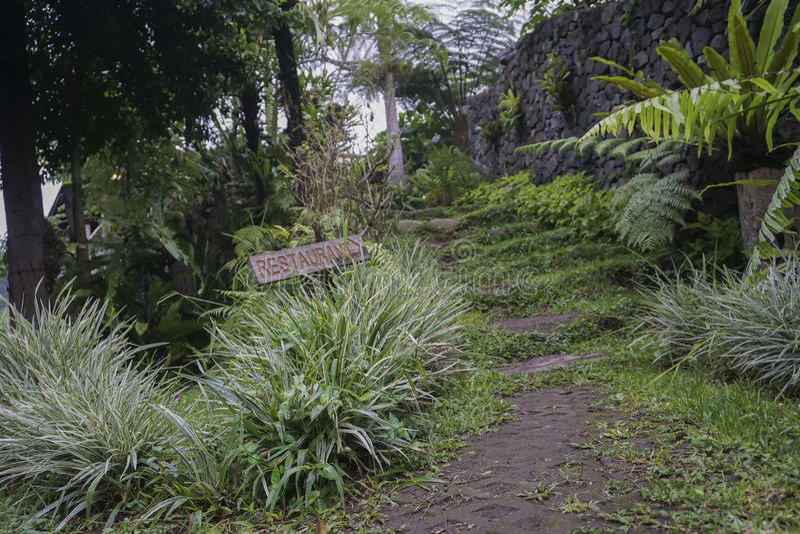 Vista del jardín verde en Bali foto de archivo
