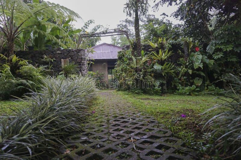 Vista del jardín verde en Bali fotografía de archivo