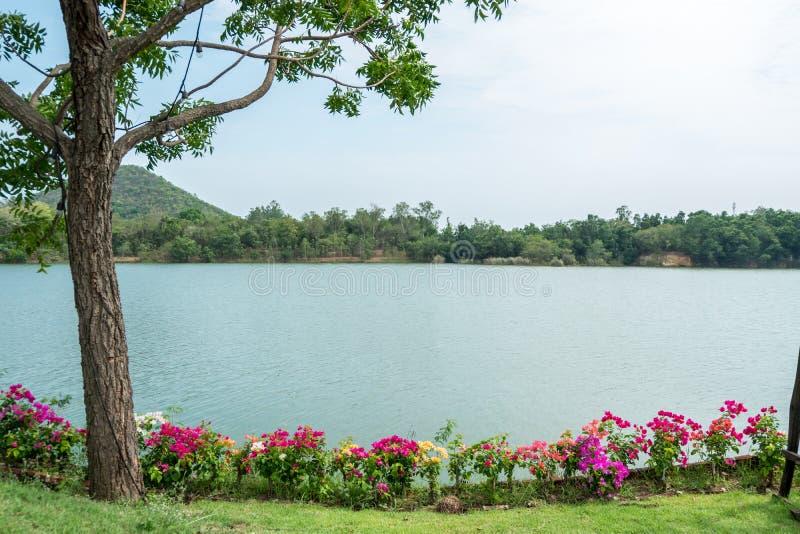 Download Vista Del Lago Con Il Fiore Variopinto Immagine Stock - Immagine di paesaggio, colorful: 117977211