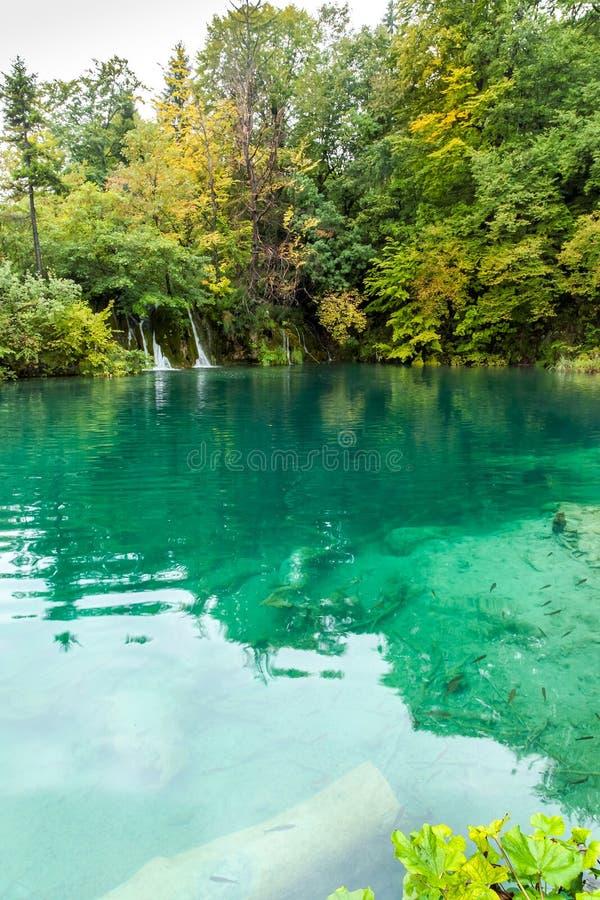 Vista del lago della foresta con acqua trasparente del turchese con di legno immagine stock