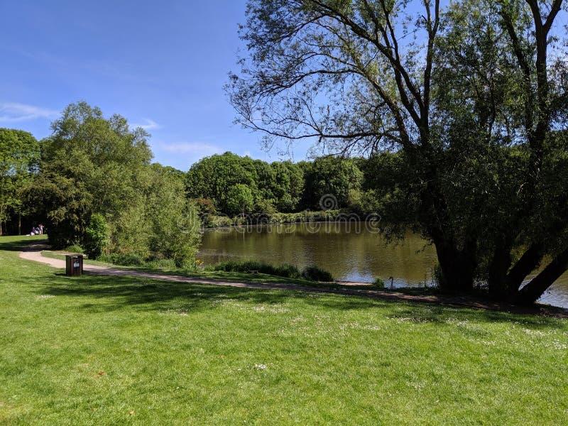 Vista del lago e degli alberi fotografie stock libere da diritti