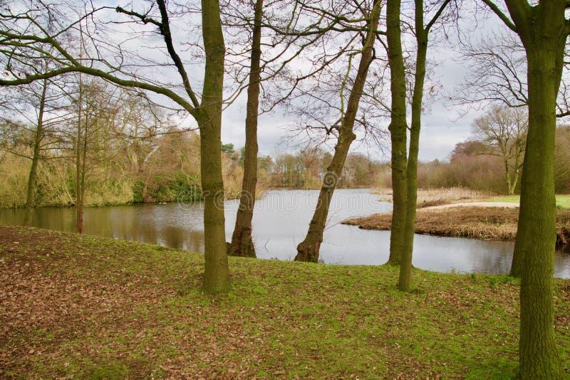 Vista del lago e gli alberi fotografia stock