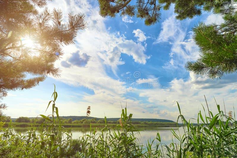 Vista del lago a través de las cañas fotos de archivo libres de regalías