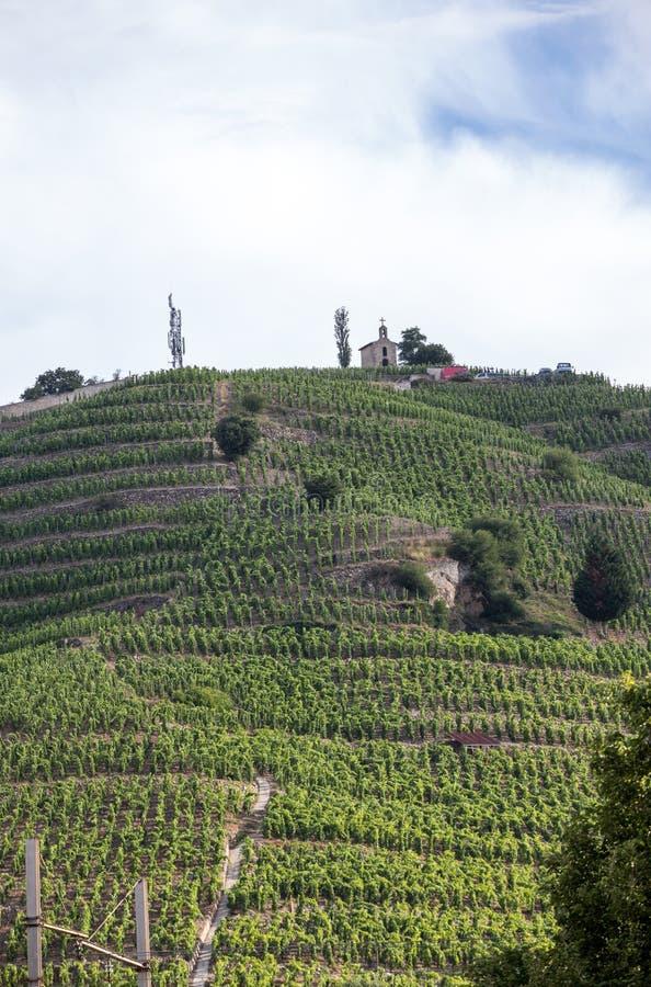 Vista del M Viñedos de la Crozes-ermita de Chapoutier en Tain l ermita del `, valle de Rhone imagen de archivo libre de regalías