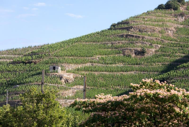 Vista del M Viñedos de la Crozes-ermita de Chapoutier en Tain l ermita del `, valle de Rhone fotografía de archivo libre de regalías