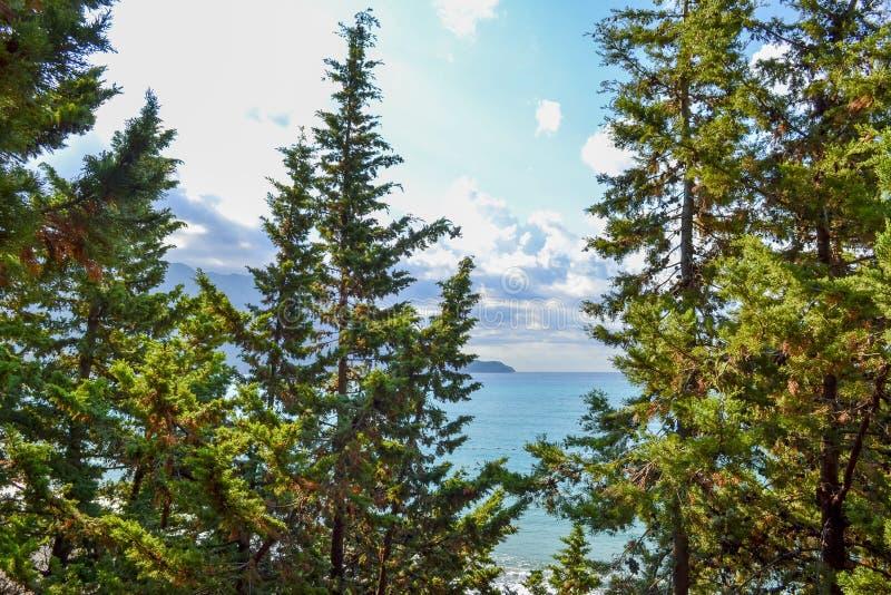 Vista del mar de la montaña, en donde los árboles de pino crecen montenegro El Budva Riviera Becici imagen de archivo libre de regalías