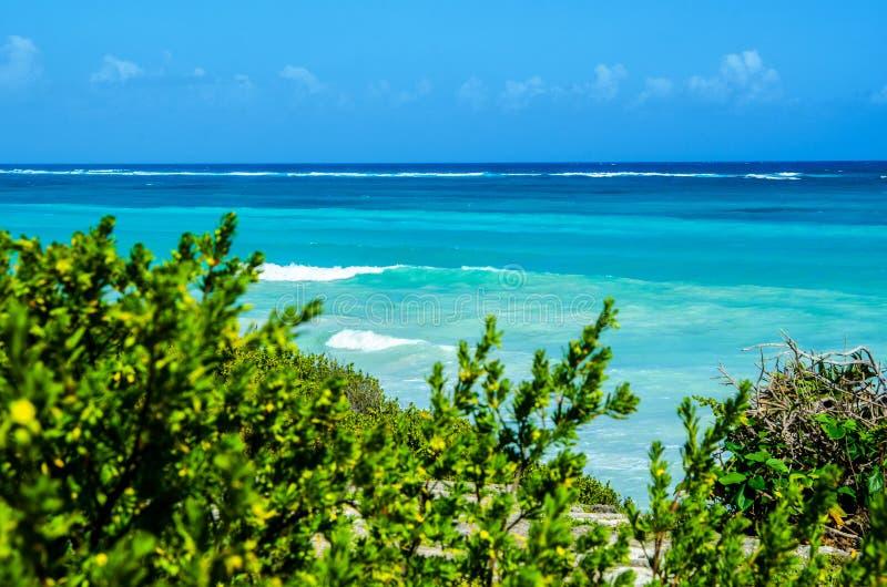 Vista del mar y de las ondas azules azules a través de arbustos verdes fotografía de archivo libre de regalías