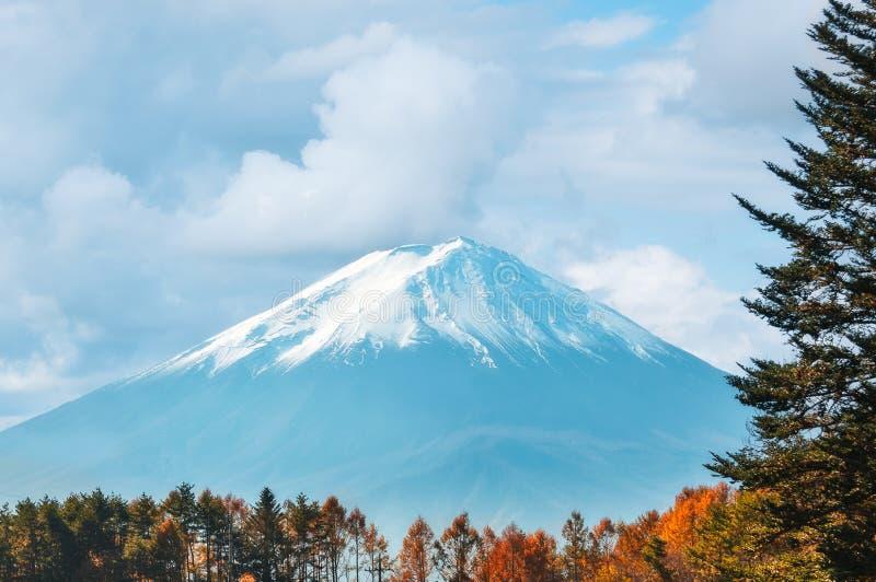Vista del monte Fuji con il cappuccio della neve e gli alberi forestali leggendari nella priorità alta immagini stock libere da diritti