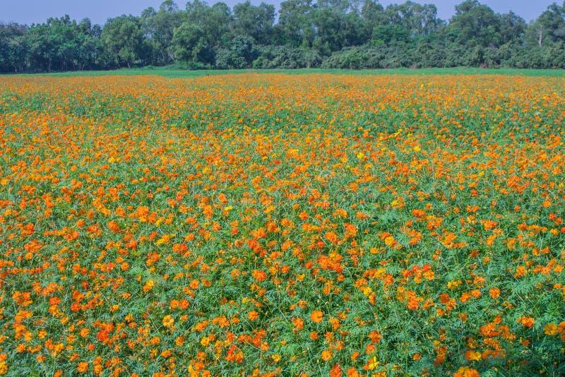 Vista del paesaggio del giacimento di fiore dell'universo immagine stock libera da diritti