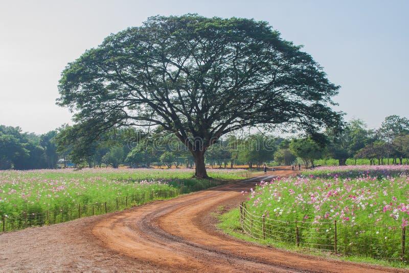 Vista del paesaggio del giacimento di fiore dell'universo fotografia stock libera da diritti
