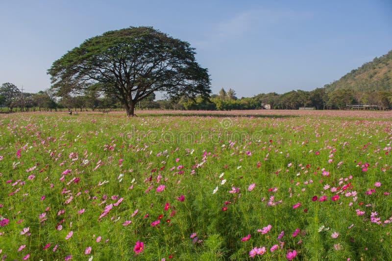 Vista del paesaggio del giacimento di fiore dell'universo immagini stock libere da diritti