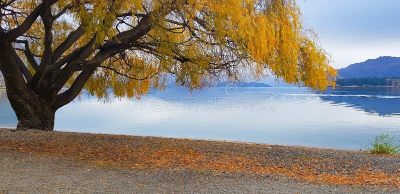 Vista del paesaggio di vista di panorama nel lago Nuova Zelanda Wanaka in autunno fotografia stock libera da diritti