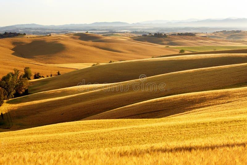 Vista del paisaje típico de Toscana fotografía de archivo