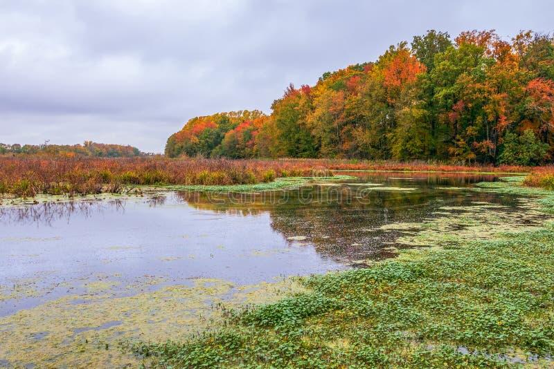 Vista del paisaje vegetal otoñal de Finis Pool Bombay Hook NWR Delaware EE.UU. fotos de archivo libres de regalías