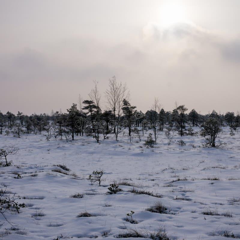 Vista del pantano en el parque nacional de Kemeri en Letonia, cubierta con nieve en invierno foto de archivo