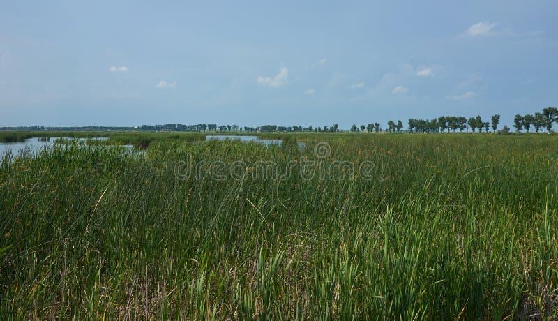 Vista del parco naturale di Comana immagine stock libera da diritti