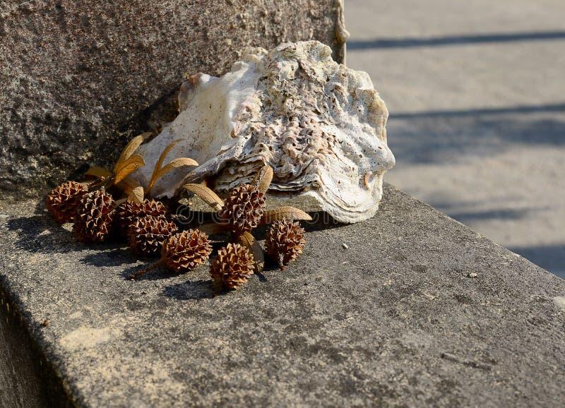 Vista del pino y del mar secados Shell en la pared del cemento fotografía de archivo
