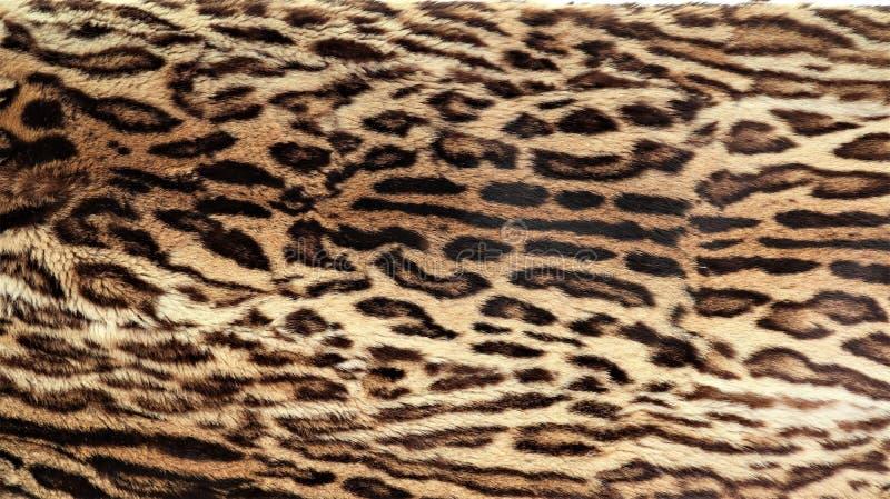 Vista del primo piano della pelle di un leopardo immagini stock