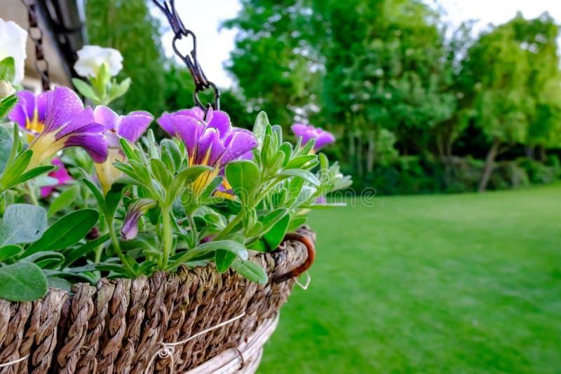 Vista del primo piano di un canestro d'attaccatura di recente piantato visto fuori di una casa del paese di estate immagini stock libere da diritti