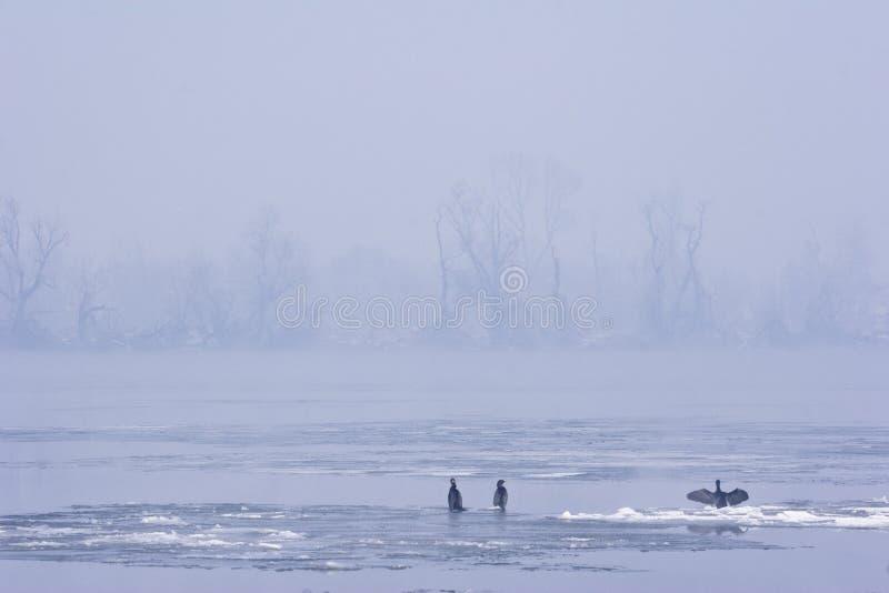 Vista del río Danubio en mediados de invierno imagen de archivo