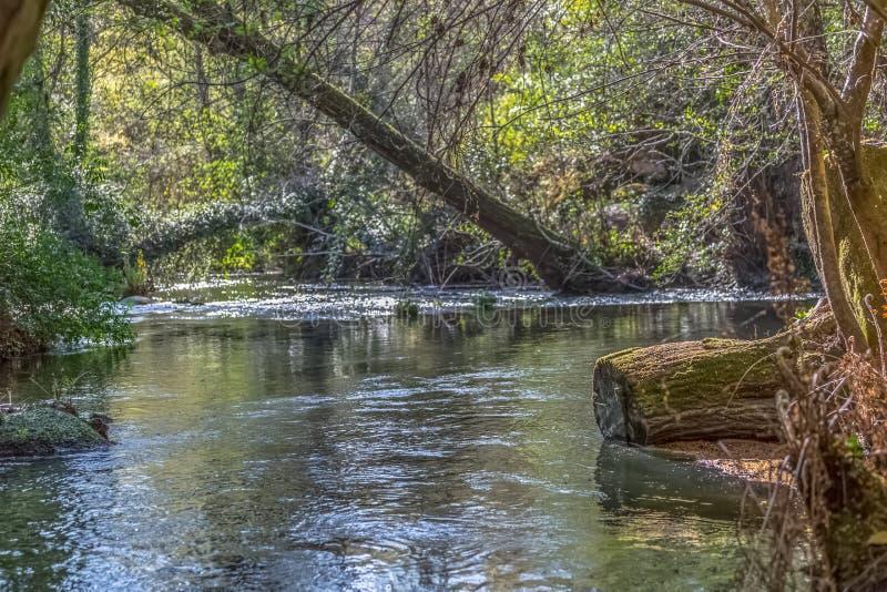 Vista del río de DÃo, con los árboles, rocas y vegetación en los bancos, reflexiones en el agua y colores brillantes fotografía de archivo