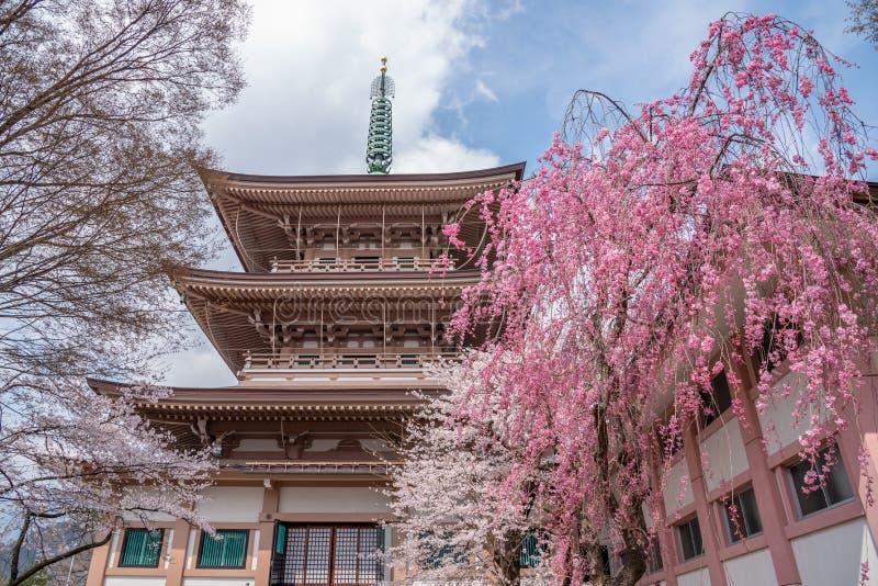 Vista del templo de Zenkoji en la ciudad de Nagano con la plena floración de la flor de cerezo imagen de archivo
