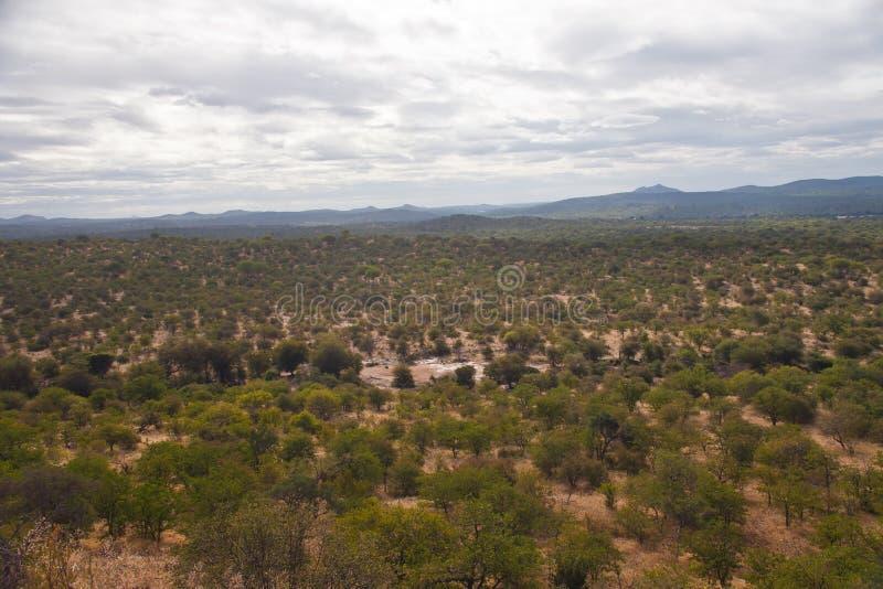 Vista del terreno en sabana del arbusto en el Limpopo foto de archivo