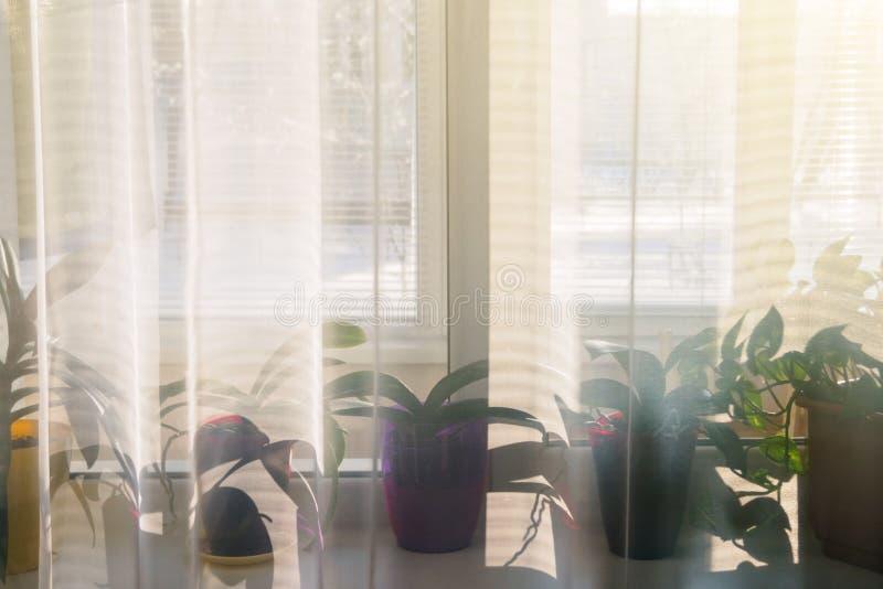 Vista del travesaño de la ventana con las flores caseras a través de Tulle, foco suave foto de archivo