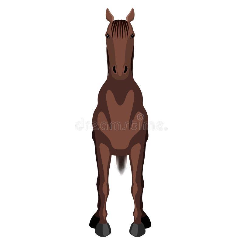 Vista delantera de un caballo libre illustration