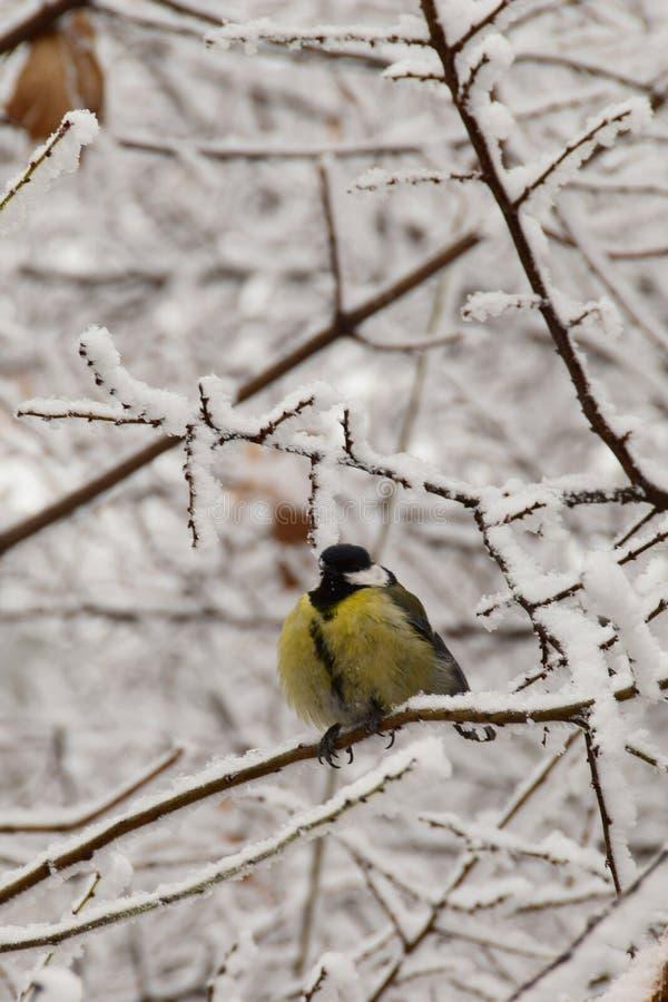 Vista delantera del primer de un paro caucásico amarillo en salvado nevoso fotos de archivo libres de regalías