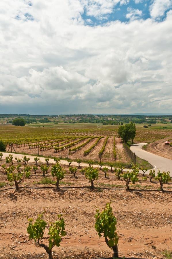 Vista delantera del viñedo de la uva en la región suroriental de España foto de archivo