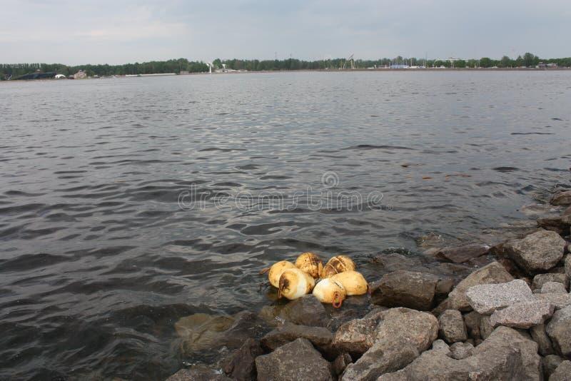 vista dell'acqua, delle rocce e dei galleggianti sul golfo di Finlandia di Pietroburgo fotografia stock