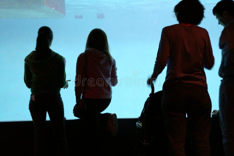 Vista dell'acquario fotografia stock libera da diritti