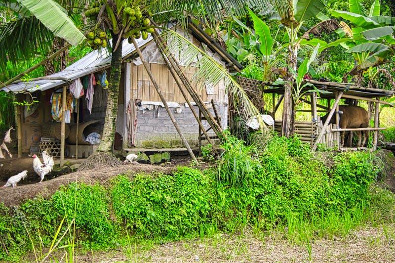 Vista dell'azienda agricola tradizionale della casa di balinese al villaggio di Tenganan Pegringsinan in Ubud, Bali, Indonesia immagine stock