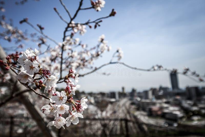Vista della città attraverso sakura fotografia stock libera da diritti